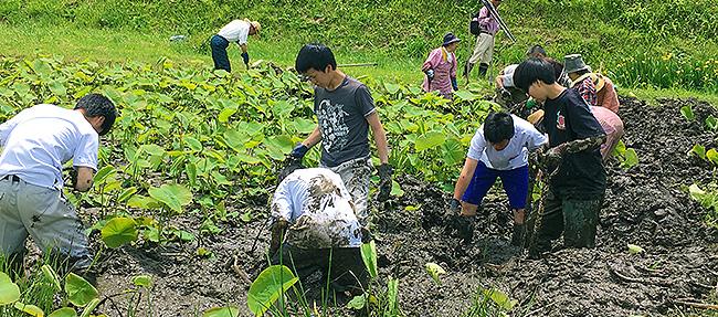 6/3(土)・4(日)  泥だらけになってレンコン掘りをしよう♪ 参加者募集中!